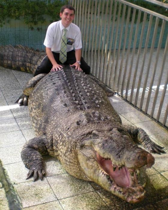 Огромный крокодил.