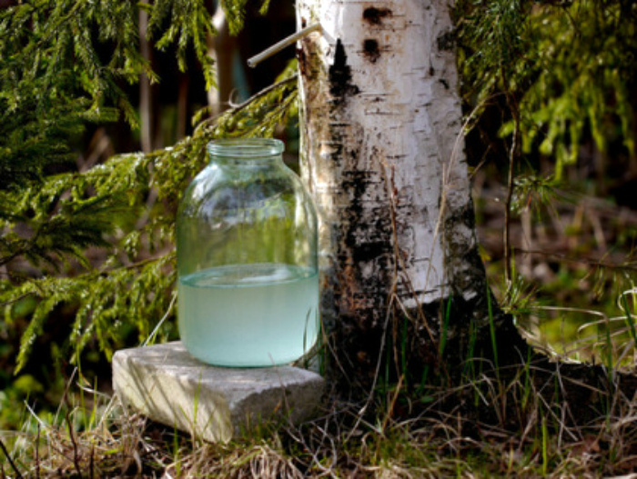 Натуральный березовый сок. | Фото: UZHGOROD.in.