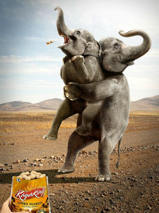 Любимое лакомство слоников.
