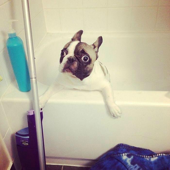 Напуганная собака.