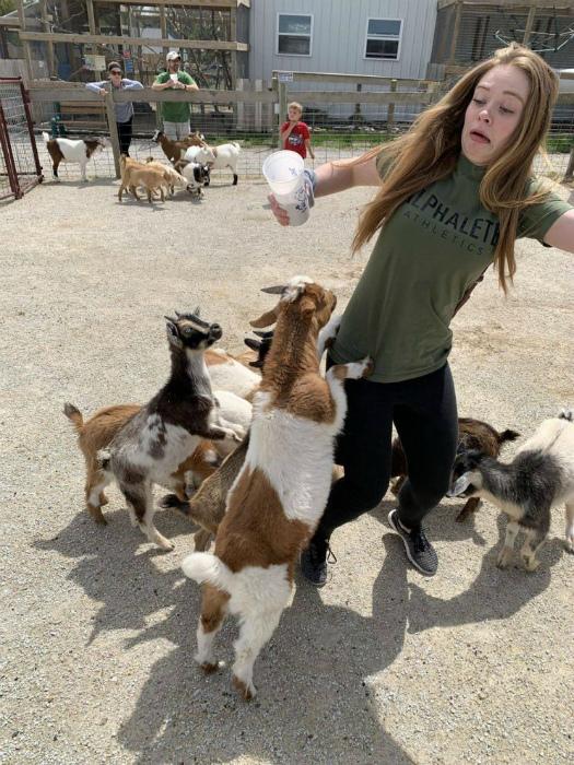 Молочные козлята и их новая жертва. | Фото: Stebok.net.