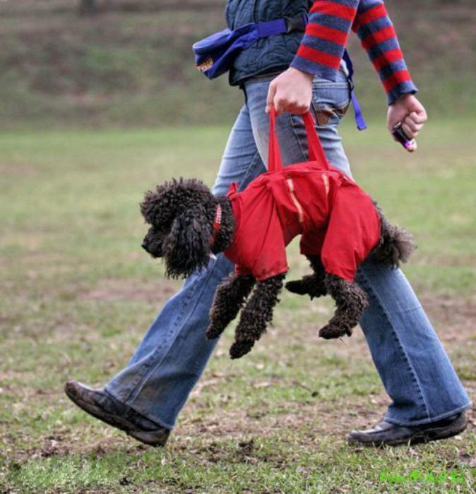 Необычный костюм для собаки.