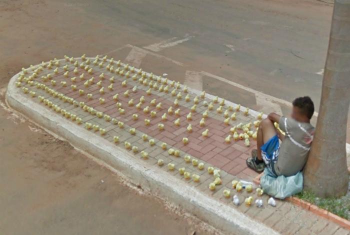Армия цыплят.