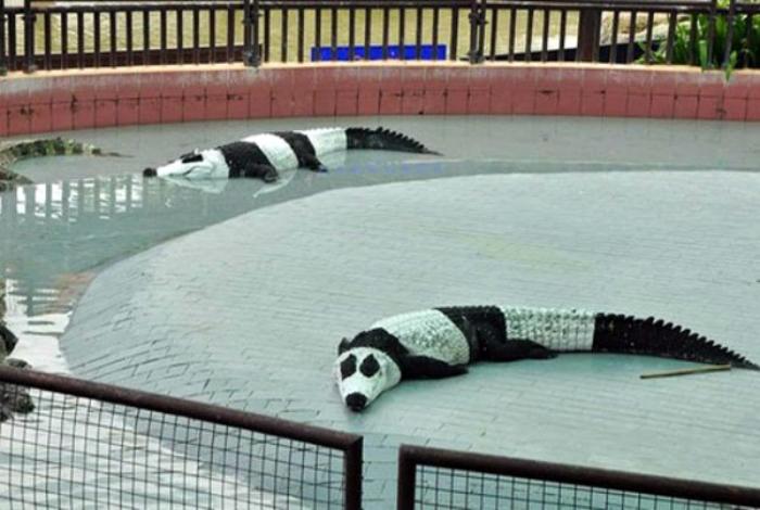 Странные крокодилы.