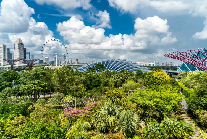 Зеленые насаждения Сингапура. | Фото: Истории моих путешествий.
