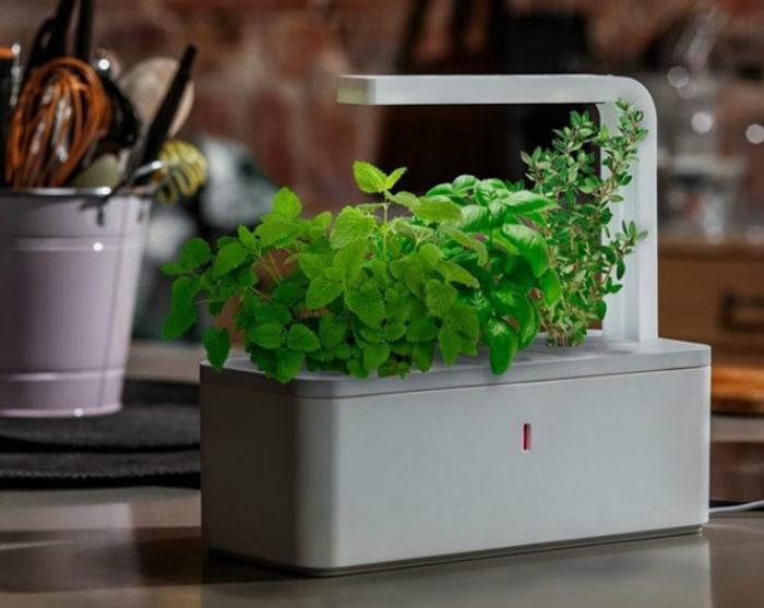 «Умный» контейнер для зелени. | Фото: Xohanoc.am.