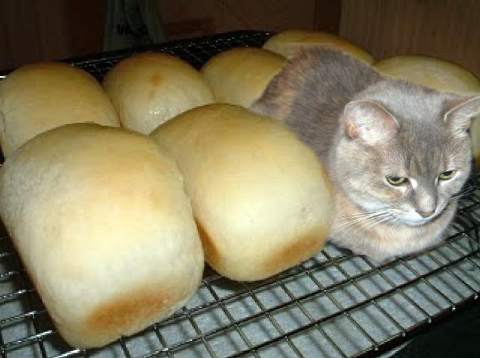 Новое хлебобулочное изделие.