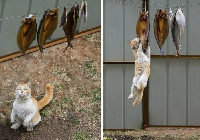 Особенности кошачьей рыбалки. | Фото: Sympa-sympa.com.
