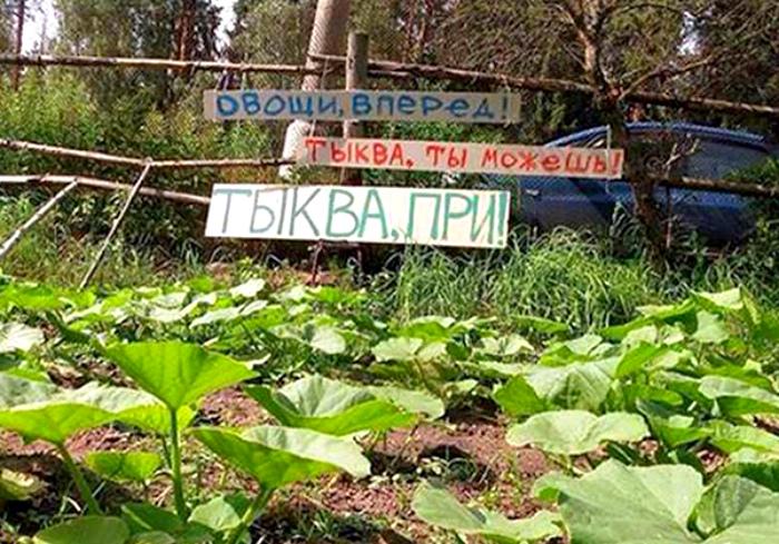 Мотивация для овощей. | Фото: Пикабу.