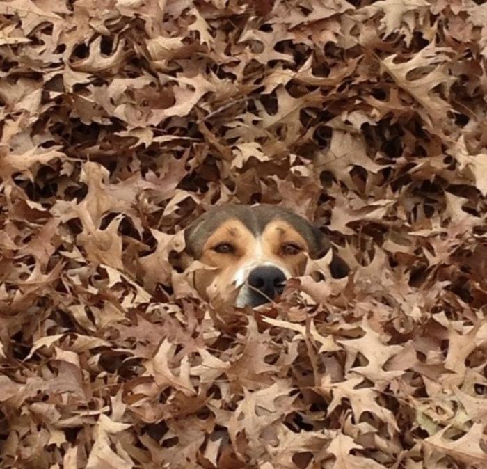 Шпион в листьях. | Фото: Demotywatory.