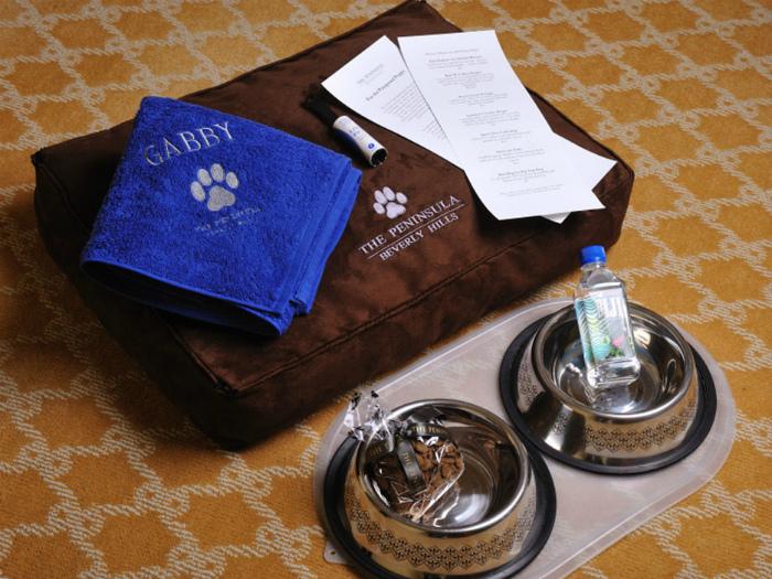 Собачий набор в гостиничном номере. | Фото: Themindcircle.