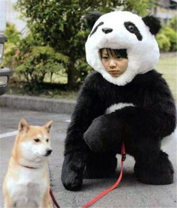 Колоритная парочка: собака и панда, которая передвигается на 4-ех лапах.
