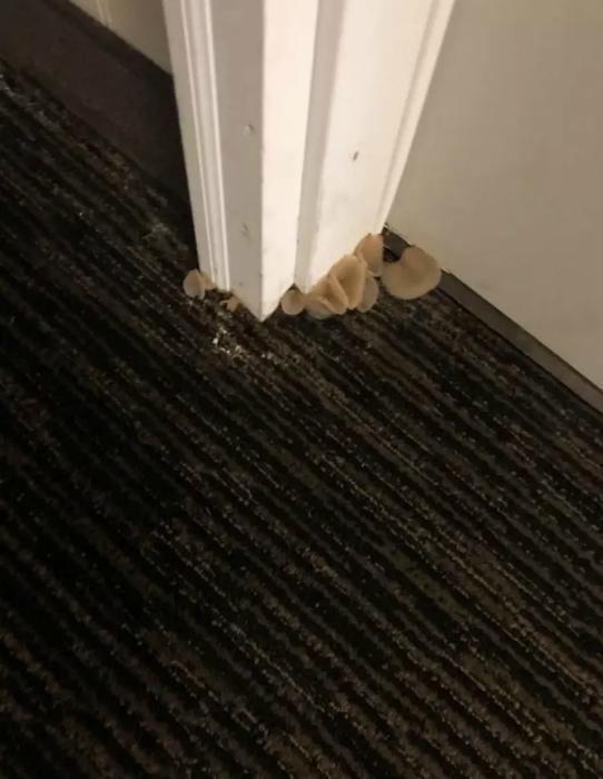Грибы в номере.