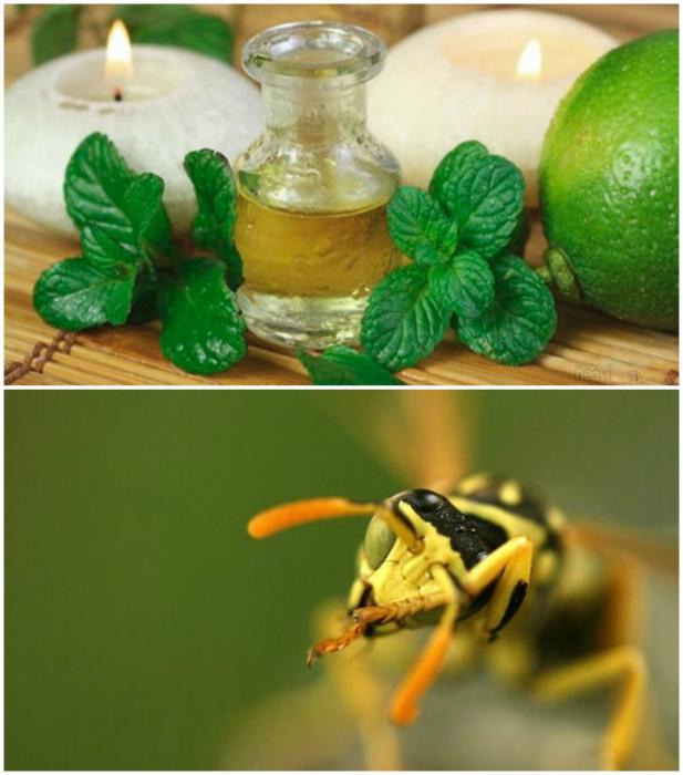 Запах мяты от ос и пчел.