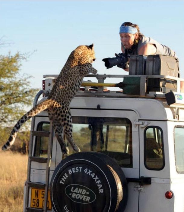 Шутки с дикими животными.