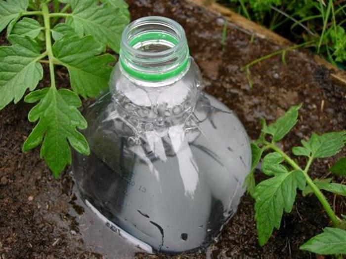 Пластиковые бутылки для полива.