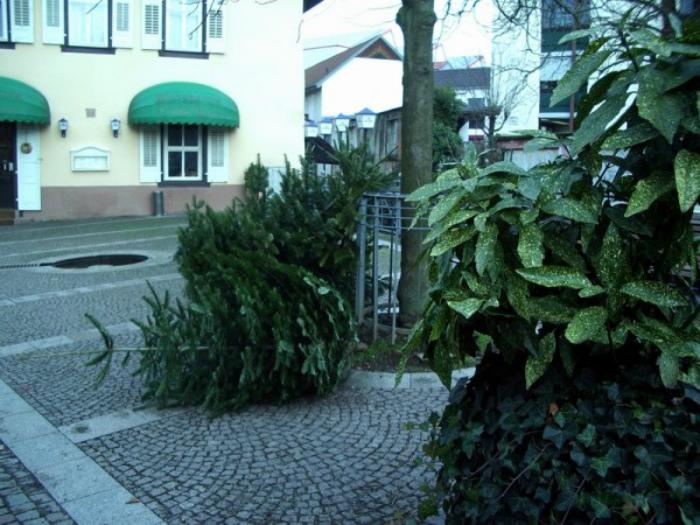 День массового вывоза елок. | Фото: marinagra - LiveJournal.