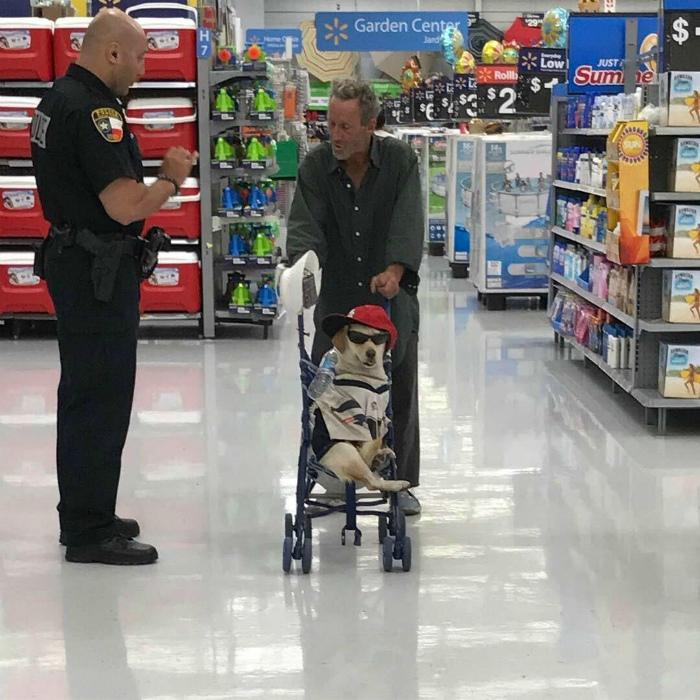 Собака в коляске.