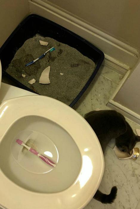 Заботливый кот выбросил старые зубные щетки.