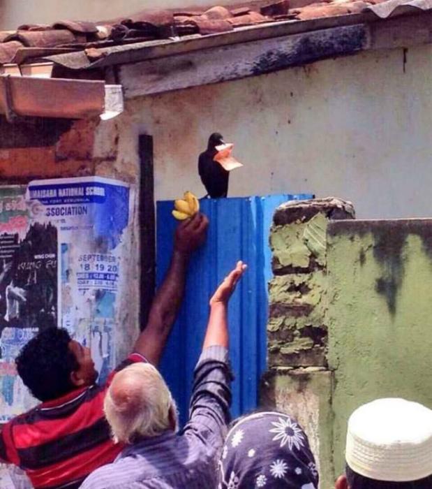 Ворона, которая сорвала куш. | Фото: yahooeu.