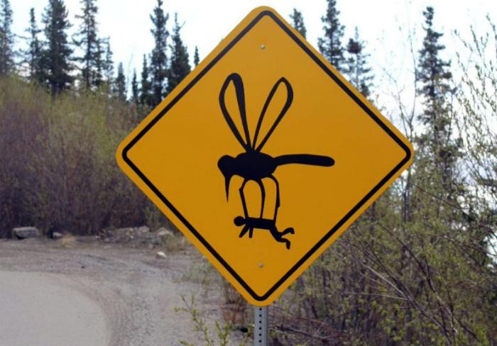 Комары-гиганты.
