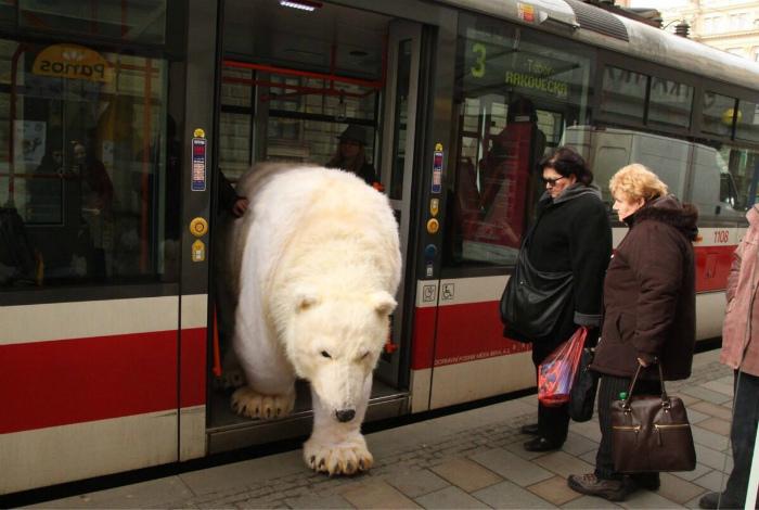 Дорогу белому мишке. | Фото: Korrespondent.net.