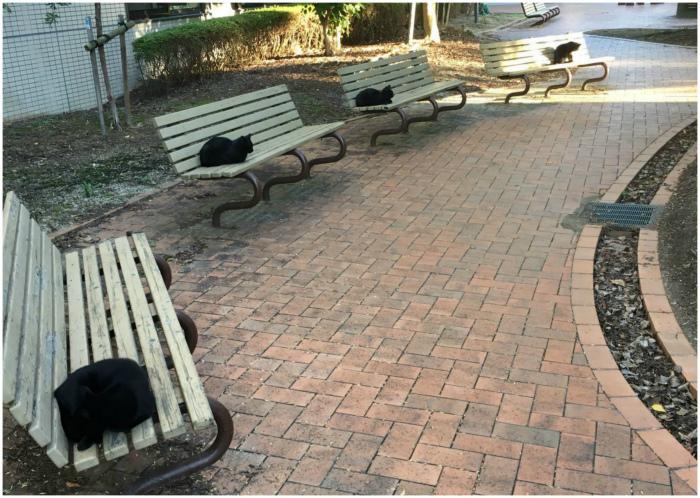 Территория черных котов.