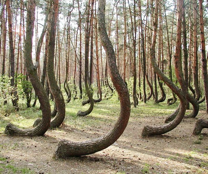 Лес в Польше.