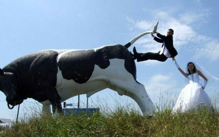 Сумасшедшие молодожены напали на быка.