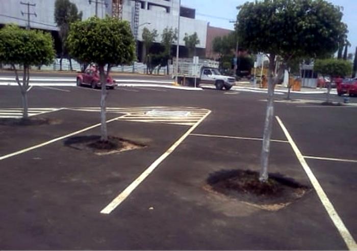 Припаркованные деревья.