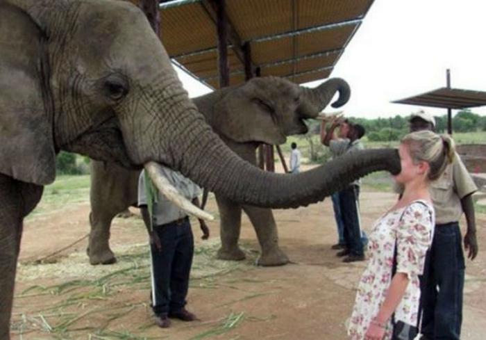 Поцелуй слона.
