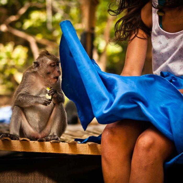 Любопытная обезьяна.