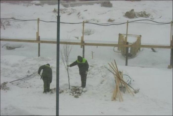 Крепкие морозы - идеальное время для высадки молодых деревьев.