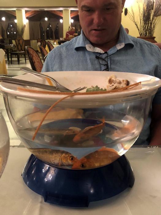 «А можете пожарить рыбок? Я не люблю, когда еда трепыхается!» | Фото: Reddit.