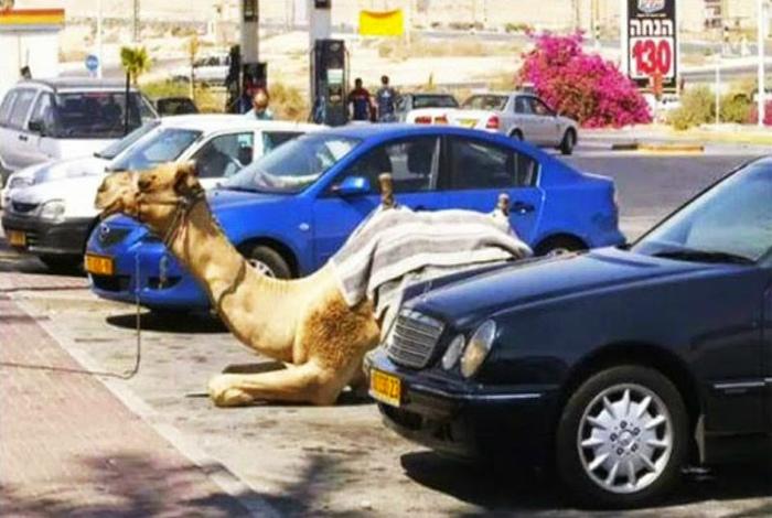 Личный транспорт на парковке.