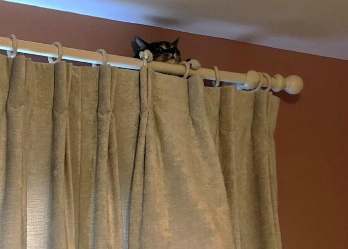 В любой непонятной ситуации притворяйся шторой. | Фото: Приколы!