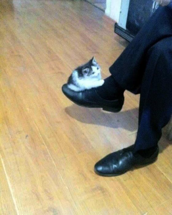 Для крошечного котенка это настоящий аттракцион. | Фото: Kienthuc.