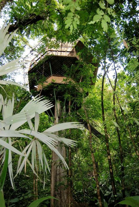 Отель, расположенный высоко на дереве.