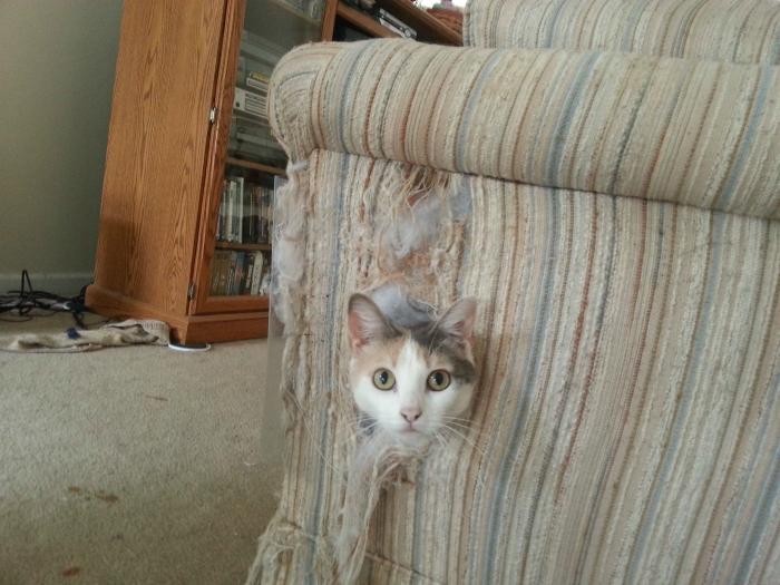 Выглянул из кресла.