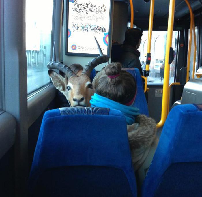 Антилопа в автобусе.