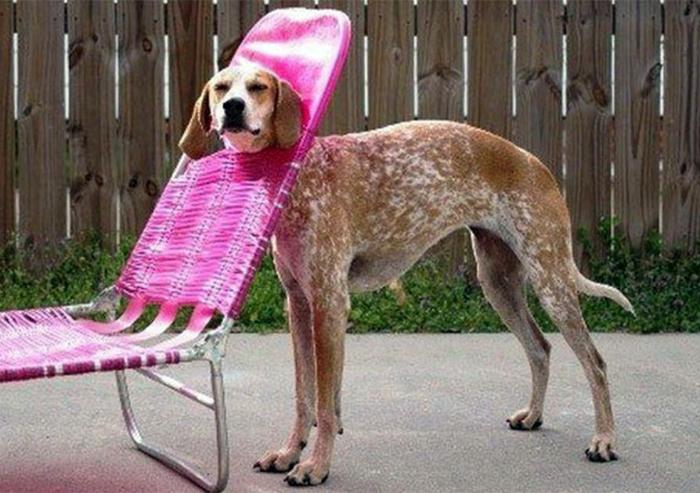 Застрявшая собака.