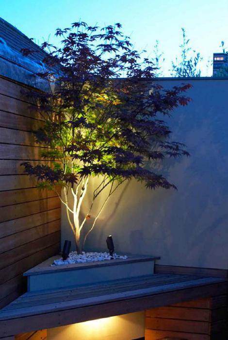 Светящееся дерево.