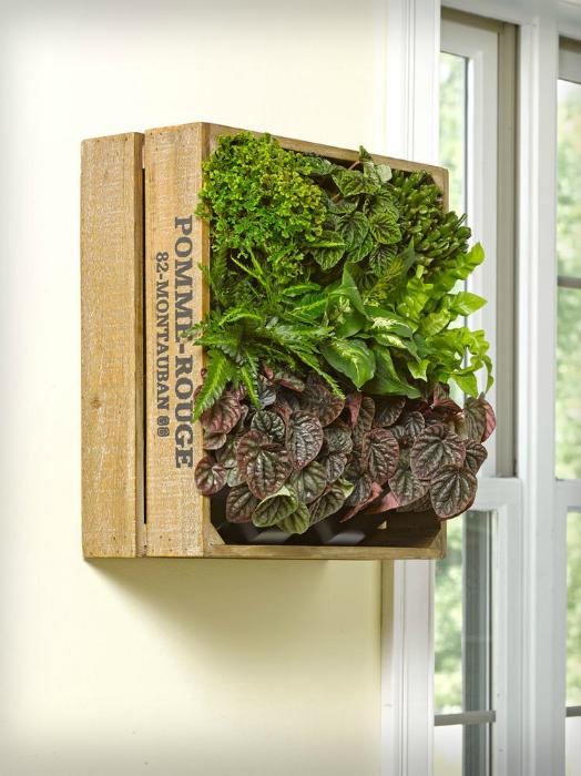 Растения в деревянном ящиках.