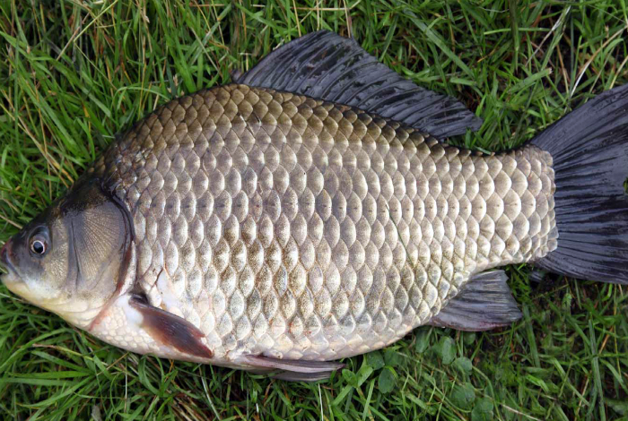 Очистить рыбу от чешуи.