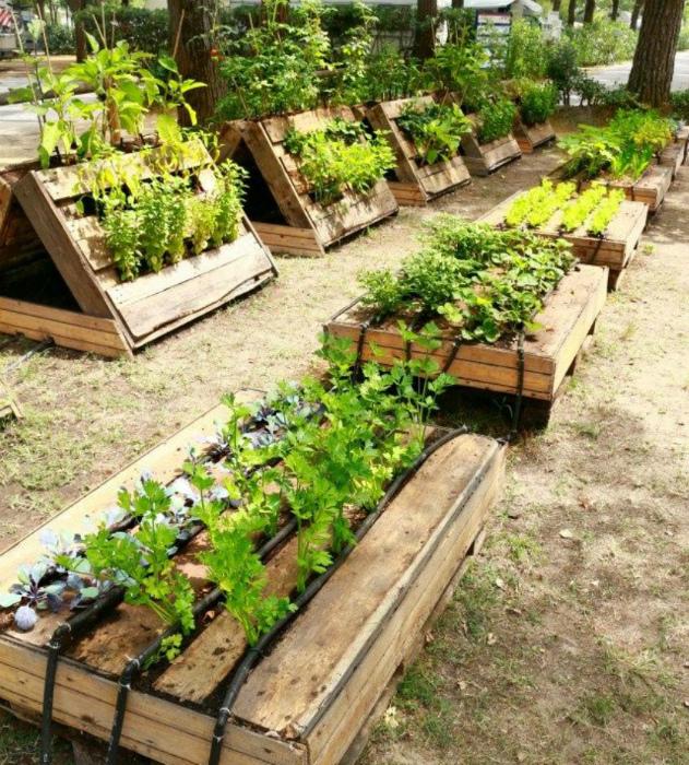 Выращивание в поддонах. | Фото: Informationen zu Dekorationsideen.