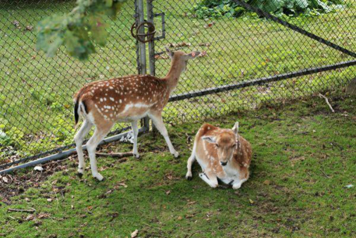 Шведы и любовь к животным.