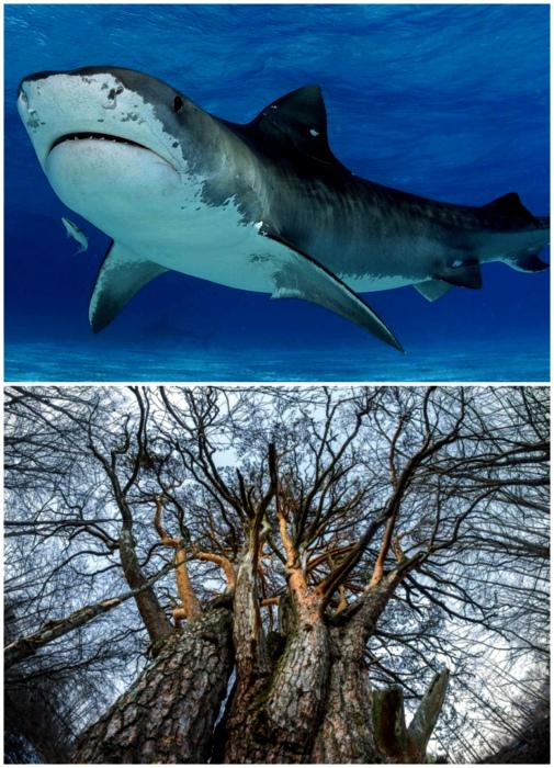Акулы появились раньше деревьев.