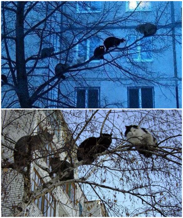 Коты прилетели. | Фото: Погранец.ру,