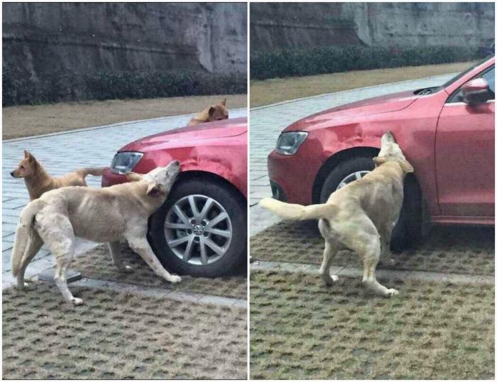 Злые собаки.