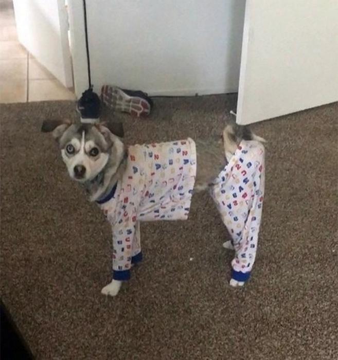 Собака с невидимыми частями.